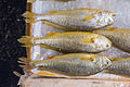 Fish in Hong Kong Market.jpg