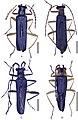 Fissocantharis (10.3897-zookeys.738.19884) Figure 1.jpg