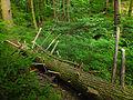 Flickr - Nicholas T - Henry's Woods (Revisited) (3).jpg
