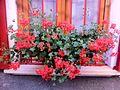 Flora of Esino Lario 4.jpg