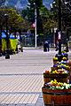 Flores en la Plaza de San Jose.jpg