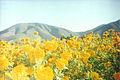 Flores palmarito.jpg