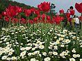 Flower-center135614.jpg