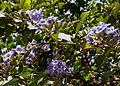 Flower1076.jpg