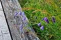 Flower 202 (31579573802).jpg