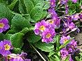 Flower 43 (6843775776).jpg