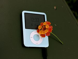 Flower for iPod (2995421295).jpg