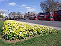 Flowerbed, Marble Arch, London W1 - geograph.org.uk - 1822800.jpg