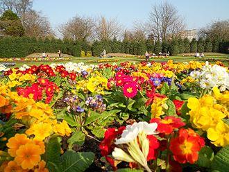 Victoria Park, Glasgow - Flowers at Victoria Park