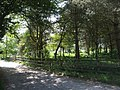 Footpath though the trees - geograph.org.uk - 423541.jpg