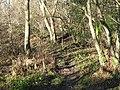 Footpath through the haunted wood - geograph.org.uk - 636068.jpg