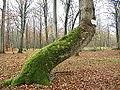 Forêt de Crécy (Somme) Le Revenant (3).JPG