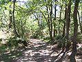 Forêt de la Coubre 022.jpg