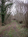 Forehoe Big Wood - geograph.org.uk - 668338.jpg