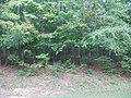 Forest, Horseshoe Bend NMP.jpg