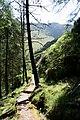 Forest Walk Gougane Barra - geograph.org.uk - 507531.jpg