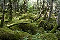 Forest in Yatsugatake 47.jpg
