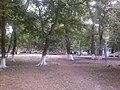 Forest of Nabran.jpg
