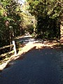 Forsythe wildlife drive after hurricane repairs (9293811252).jpg