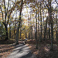 Fort Mill Ridge Civil War Trenches Romney WV 2008 10 30 09-square.JPG