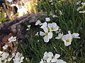 Frühlingsdraum.jpg