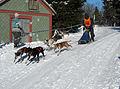 Frauenwald, Hundeschlittenrennen, 3.jpg