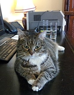 Freya (cat) twelveth Chief Mouser to the Cabinet Office, conjointly with Larry
