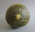 Futuro Melone 3 (fcm).jpg