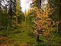 G. Apatity, Murmanskaya oblast', Russia - panoramio (13).jpg
