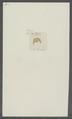Gammarus podurus - - Print - Iconographia Zoologica - Special Collections University of Amsterdam - UBAINV0274 098 02 0014.tif