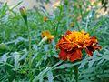 Garden Beauty.jpg