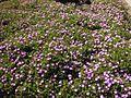 Gardenology-IMG 5088 hunt10mar.jpg
