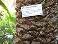 Gardenology.org-IMG 1007 rbgs10dec.jpg