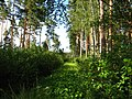 Garkalnes novads, Latvia - panoramio - SkyDreamerDB (12).jpg