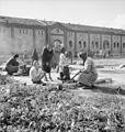 Germany Under Allied Occupation BU11357.jpg