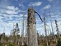 Gestorbener Wald.jpg