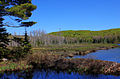 Gfp-michigan-porcupine-mountains-state-park-by-lily-pond.jpg