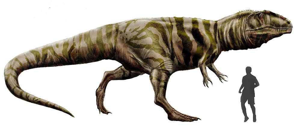 Taille du Giganotosaurus