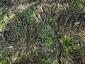 Glasowbachniederung Selchower-See 161.jpg