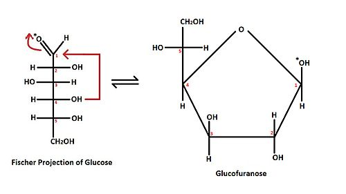 Structural Bioch...D Fructose Haworth Projection