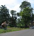 Goa - An Overcast Season (12).JPG