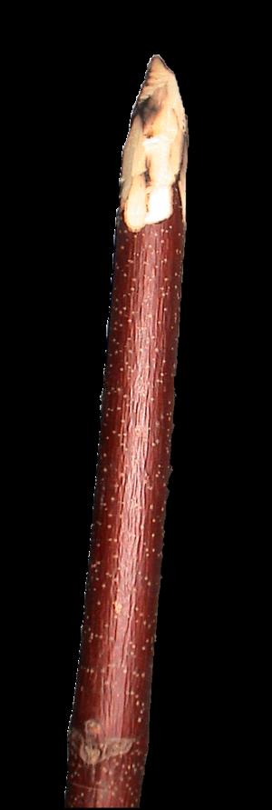 Digging stick - A digging stick