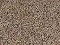 Grass-4145.jpg