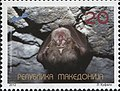 Greater Horseshoe Bat (Rhinolophus ferrumequinum).jpg