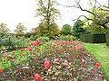 Greenwich Park, rose garden - geograph.org.uk - 1540523.jpg