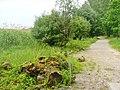 Grunewald - Haveluferweg (Havel Riverside Path) - geo.hlipp.de - 37227.jpg