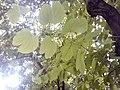 HK 西營盤 Sai Ying Pun 第三街遊樂場 Third Street Playground 公園 LCSD park green plants n trees August 2017 Lnv2 02.jpg