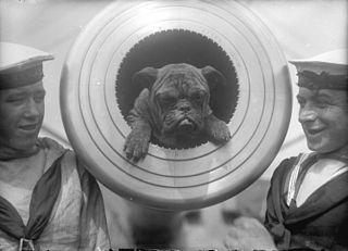 320px-HMS_New_Zealand_dog_mascot.jpg