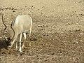 Hai Bar Yotvata Nature Reserve Tour 12.jpg
