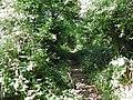 Halloughton Woods - geograph.org.uk - 40801.jpg